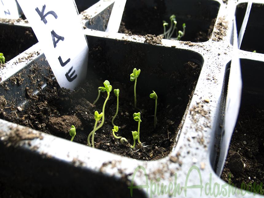 Growing Vegetables ApinchAdash.com
