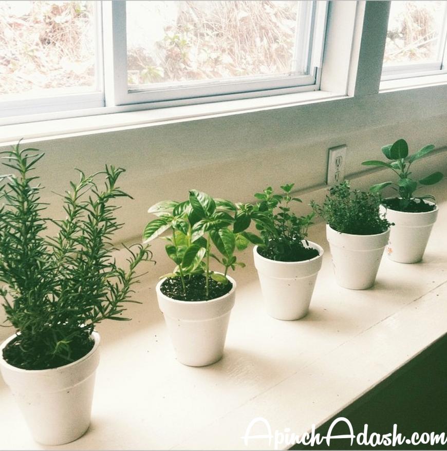Herbs apinchadash.com