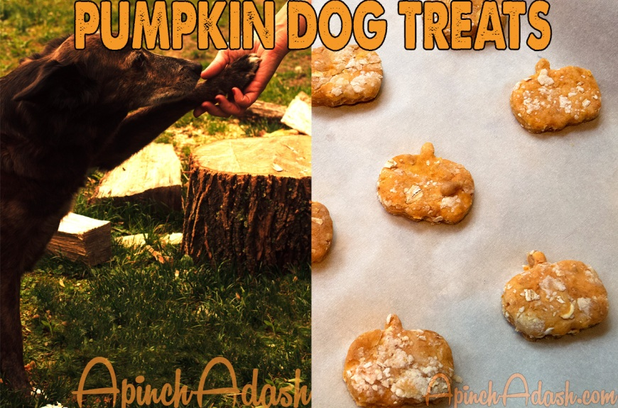Pumpkin Dog Treats apinchadash.com